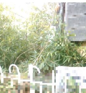 鶴ヶ島、空き家の遺品整理と庭木状況